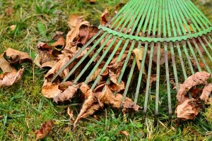 green rake with leaves under the rake