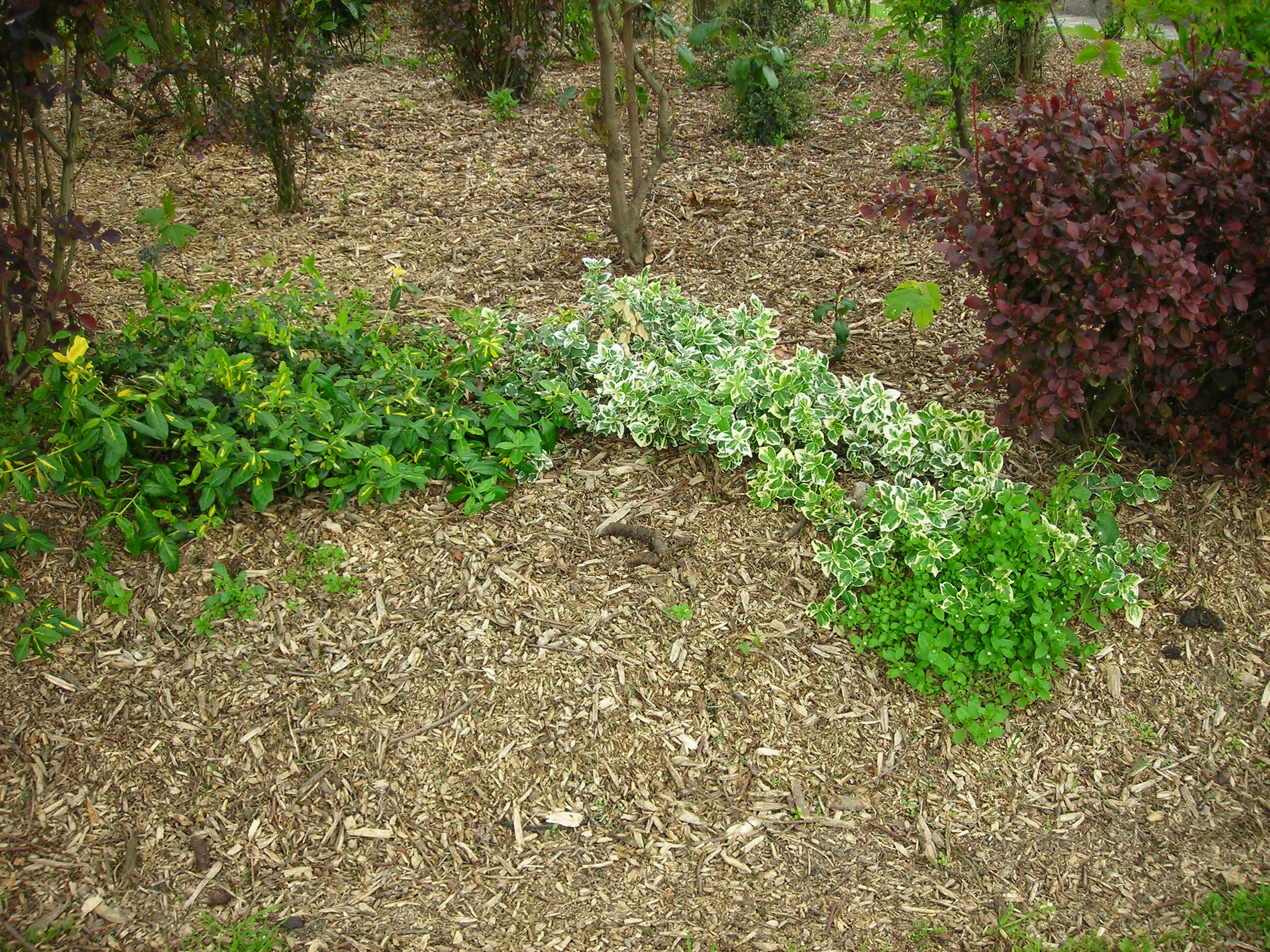 All You Need to Know About Garden Landscaping Mulch Frador