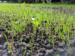 When is the Best Time to Plant Grass Seed in Minnesota?
