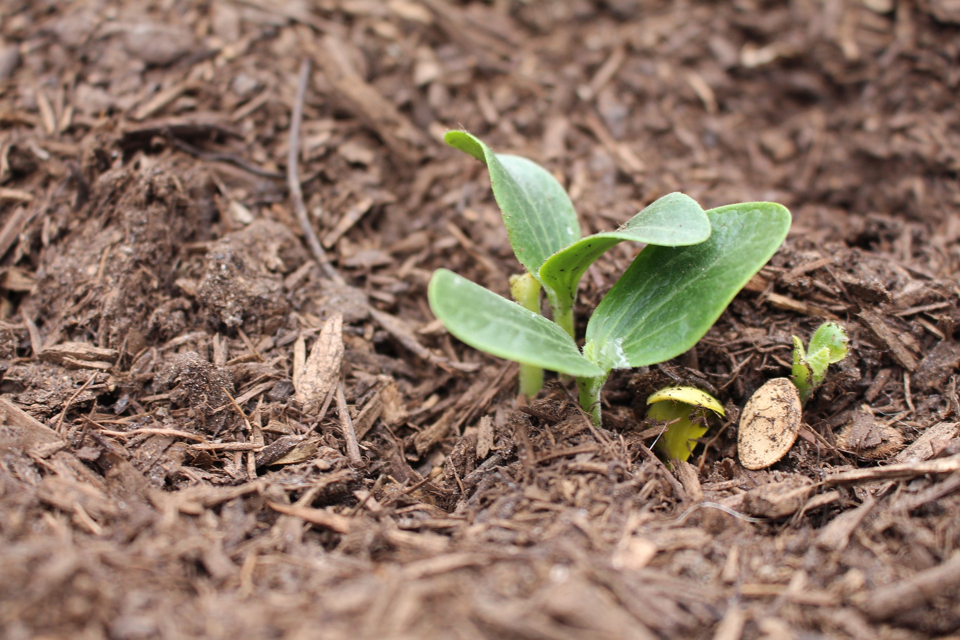 What is the Best Mulch for Gardeners with Clay Soil