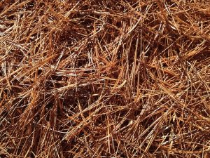 Pine needles make a great mulch